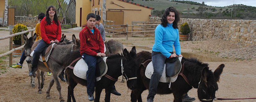 paseo-burros-m